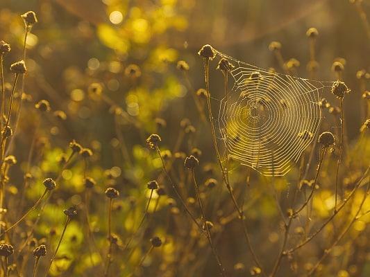 Comment chasser les abeilles solitaires?