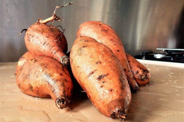 À quelle vitesse germer des patates douces?